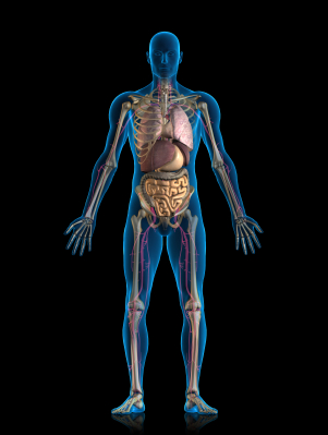 3 15   human body