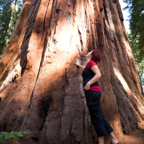 woman looking up at redwood